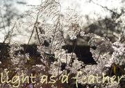 LightAsAFeatherLouiseGainsweb