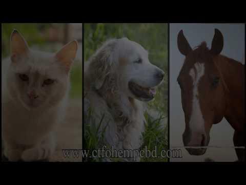 BUZZEZEVIDEO CTFO CBD PRODUCTS FOR PETS