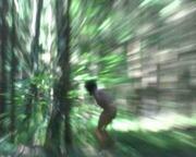 Bungle on the jungle