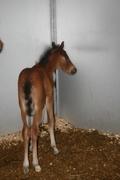 Baby Sirus