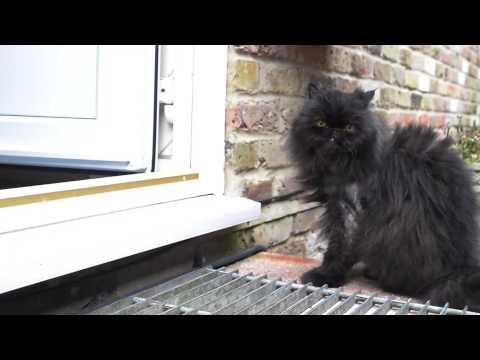 Caffrey the amazing two legged cat