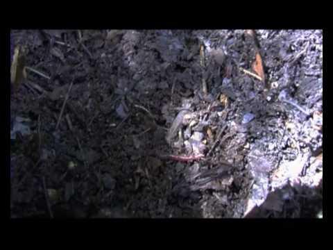 NYC Composting