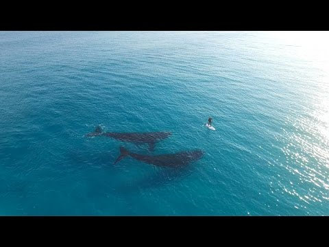 Paddle Boarding with Whales, Esperance Australia