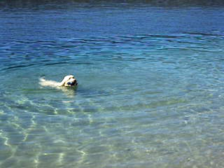 Pedro swimming in Ruby Lake