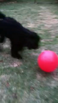 Puk's red ball