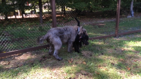 Turbo and Quinn Playtime