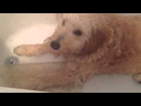 Maggie in tub. You-tub