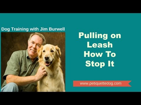 Pulling on Leash - How to Stop It a Video by Jim Burwell's Petiquette