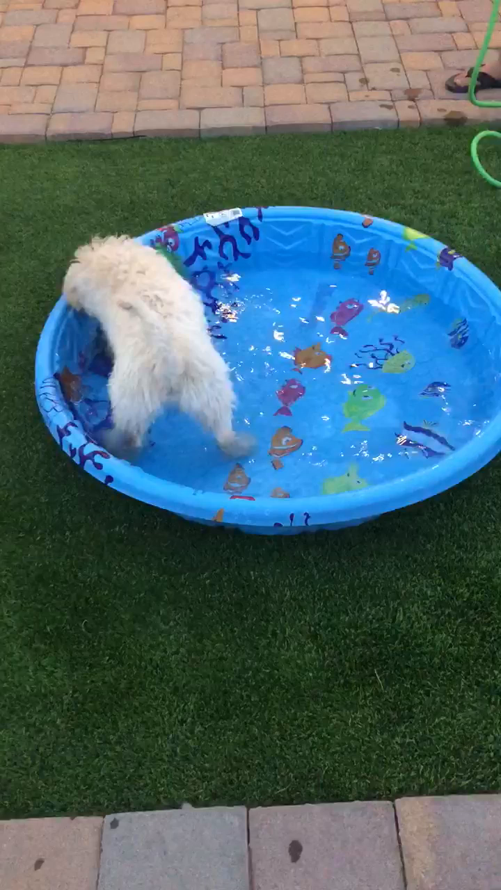 First time playing in the pool!