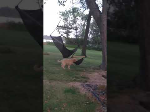 Maple Playing with Swinging Tree Chair!