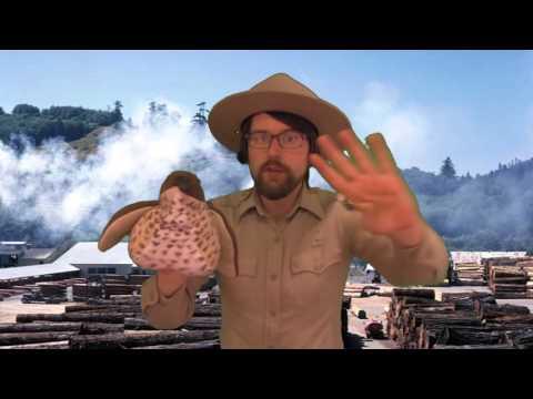Marbled Murrelet Rap (California State Parks)