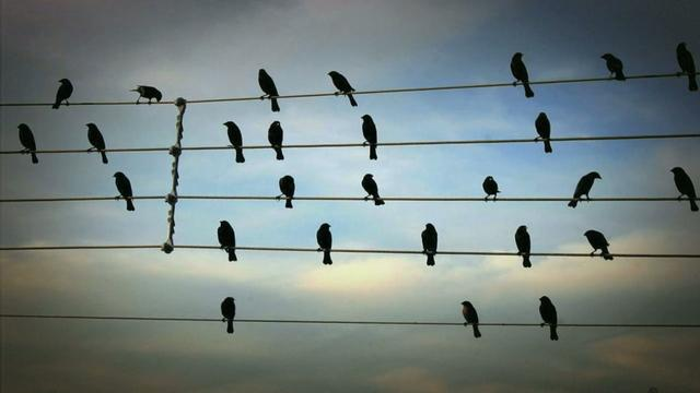 Melody Created by Birds on the Wires