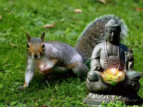 Spirituality for Squirrels