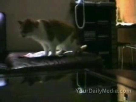 Animal Evolution;talking cats