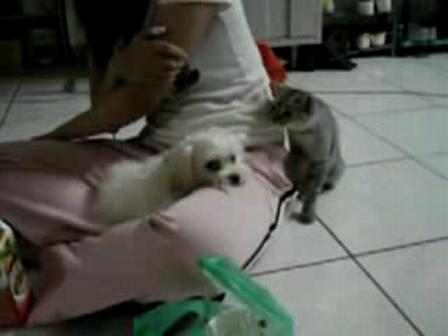 Animal Evolution;passive aggressive kitten