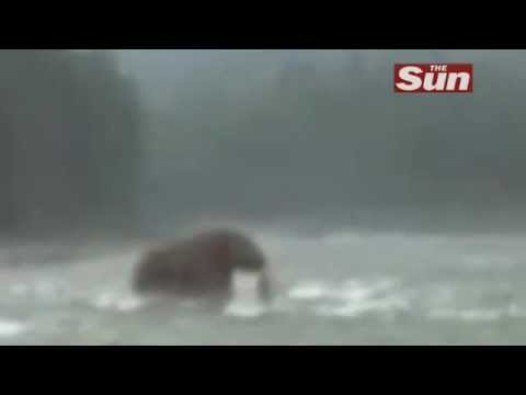 Woolly mammoth caught on video??