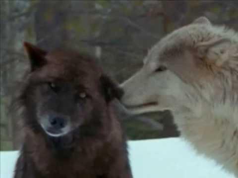 Wolves ~ Sacred Spirit ~ Yeha Noha