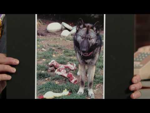 David Letterman - Kristen Stewart's Pack of Wolves