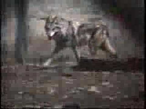 In Memory of the Last Wild Mexican Wolf (see More info for more details)