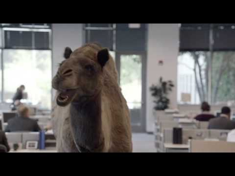 "Hump Day REMIX ""Guess What Day It Is"" Camel (FINAL) Happier than a Camel on Wednesday"