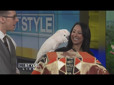 Meet a Lovebird and a Cockatoo on WTNH CT STYLE