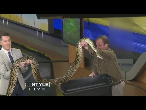 Animal Embassy: A Snake Stops By CT Style