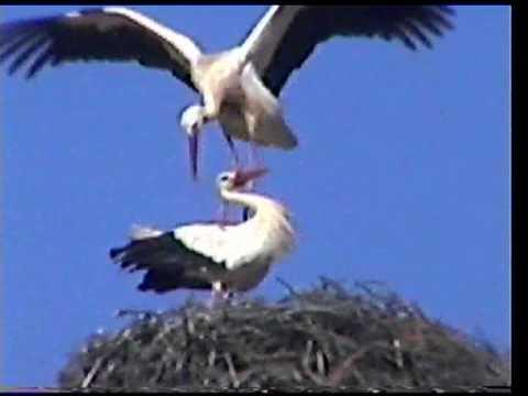 FERRAGUDO-ALGARVE world of birds,sea-gul and stork