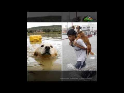Perú: Los números e imágenes dejados por la ola de huaicos