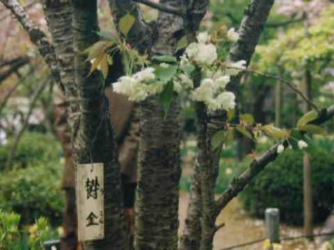 弥彦神社から佐渡へ Aplile 30 2000