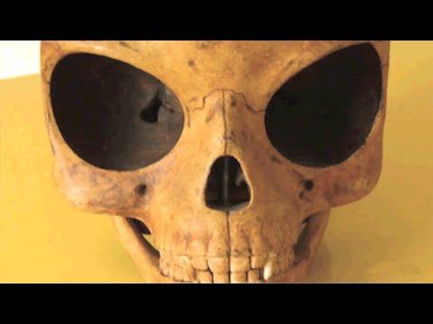 デンマークでエイリアンの頭蓋骨見つかる