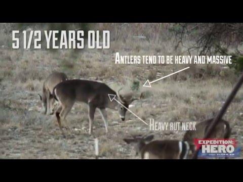 Aging Bucks on the Hoof