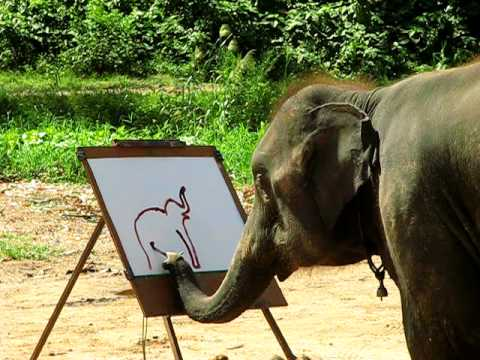 Suda - The Painting Elephant
