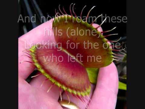Venus Flytrap by Quixote Fugly with lyrics