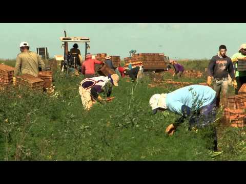 Conheça o curso de Agronomia - Profissões em Foco