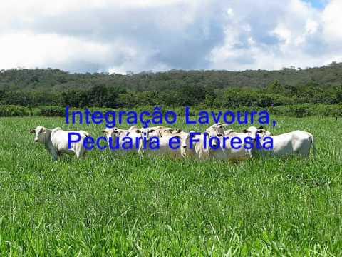 MODA DO AGRÔNOMO  - TONICO E TINOCO - Arte: Eng. Agr. ARNALDO BONFIM