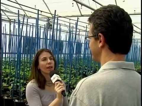 Embrapa Soja - Nova cultivar de soja facilita manejo da ferrugem