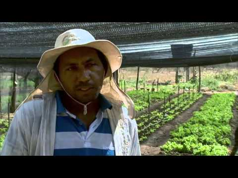 Agricultores familiares receberam 130 mil cisternas para produção agrícola do governo federal