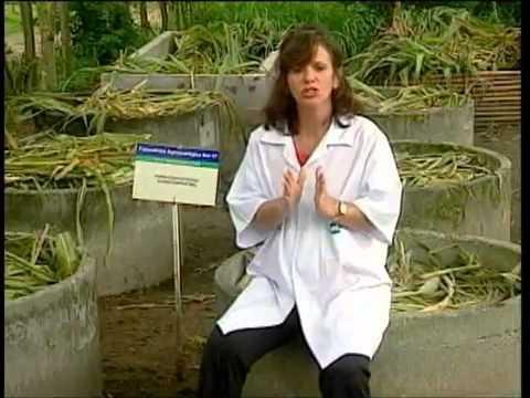 Minhocultura: alternativa agroecológica para reciclagem de resíduos orgânicos