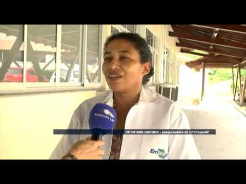 Amazônia News - Aprenda a proteger as plantas contra as pragas