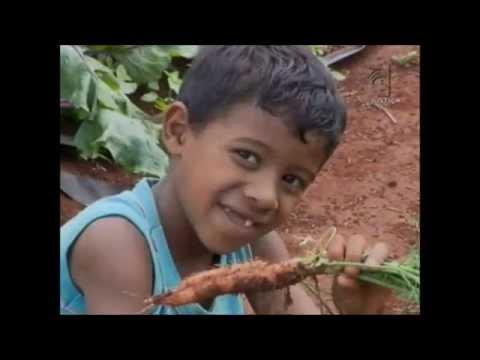 Meio Ambiente por Inteiro - Agricultura familiar