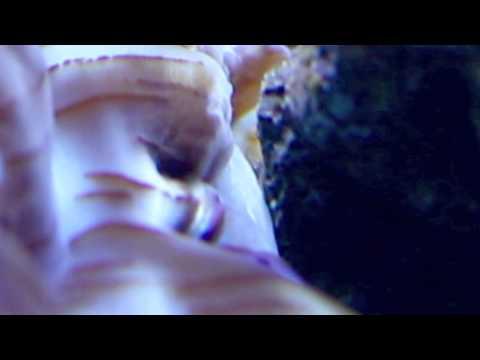 Amphipods Attack Clam