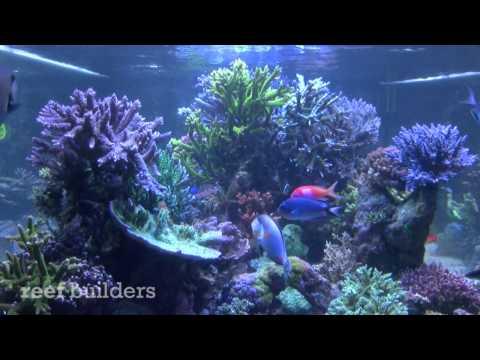 The Rocky Mountain Reef Tank