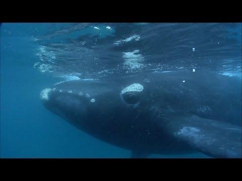 Massive whale wants human company!
