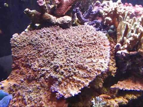 1200 gallon reef at 9000 feet