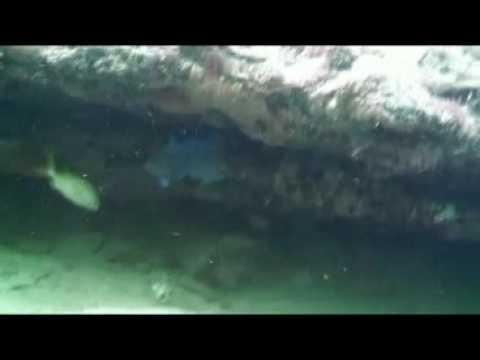 Fort Lauderdale Coral reef