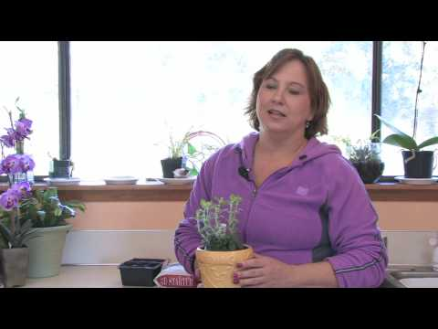 Gardening Tips : How to Start a Window Sill Herb Garden