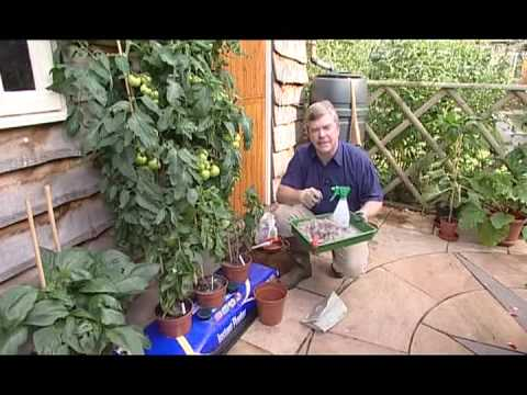 Gardening Tips - Tomato Plants