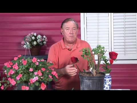 Growing Roses : Planting a Rose Garden