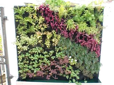 Outdoor Vertical Garden / Green Wall / Living Wall By Vertical Green www.verticalgarden.com.sg