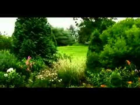 How to Design a Perennial Garden : How to Plant Shrubs in a Perennial Garden
